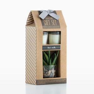 Oh My Home Aromatic Candles with Decorative Cactus (pack of 3)