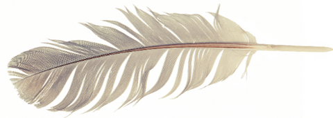 Eagle Feather- Aiyana Jewelry