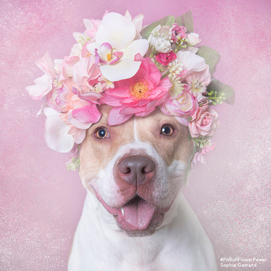 Dog Power In Bloom with Sophie Gamand