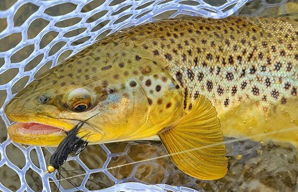 Spring Fishing On The Madison - Big Browns