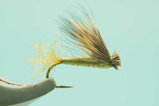 X Caddis Foam Olive #14