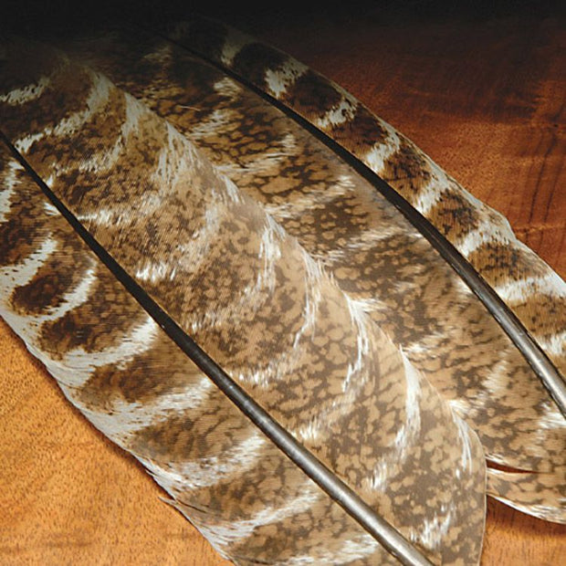 Mottled Turkey Quills