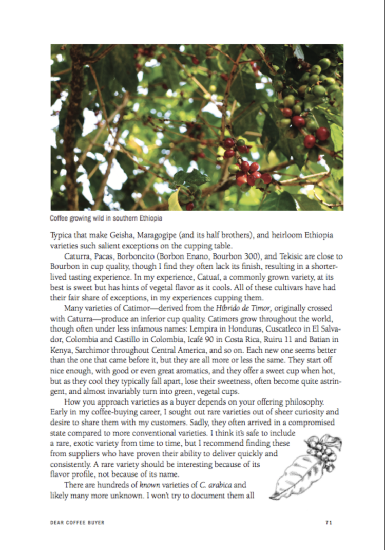 Dear Coffee Buyer - A Guide To Sourcing Green Coffee