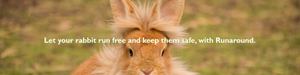 runaround rabbit. run safe and free.