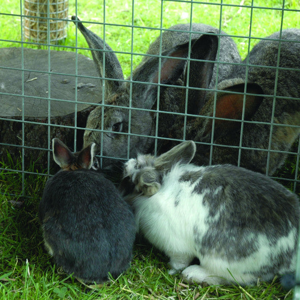 bonding rabbits mesh wall