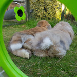 view through a clover Runaround Door, two happy rabbits resting in the sun