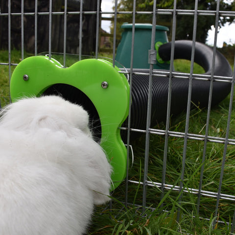 Rabbit 'Polar' looks through connection kit that links to a Hay Hutch