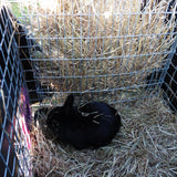 hay feeder rabbit guinea pig