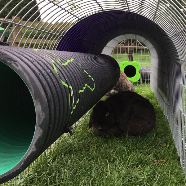 den pipe rabbit
