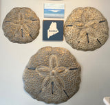 Metal Sand Dollars Wall Art