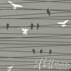 Grafic Birds on a Wire in Stone from Grafic by Latifah Saafir Studios for Hoffman Fabrics