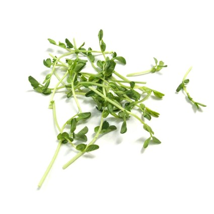Quanfa Organic Sprouts Vegetables Snow Pea Sprouts