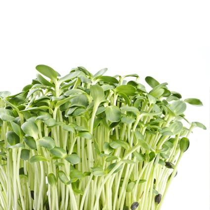 Quanfa Organic Sprouts Vegetables Sunflower Sprouts