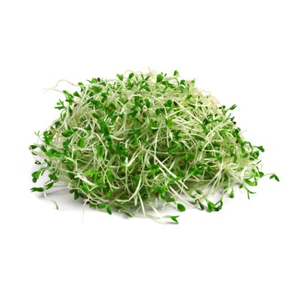 Quanfa Organic Sprouts Vegetables Alfalfa Sprouts