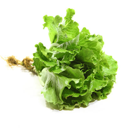 Quanfa Organic Leafy Vegetables Local Lettuce