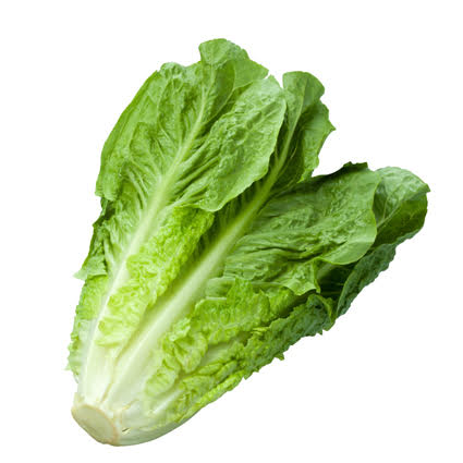 Quanfa Organic Leafy Vegetables Cos Lettuce