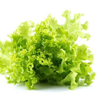 Quanfa Organic Leafy Vegetables Green Coral Lettuce