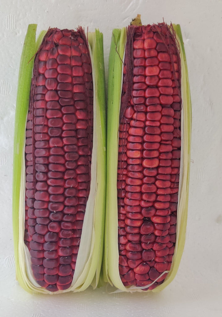 Red Ruby Corn