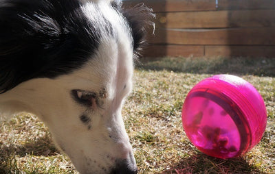 Tumbler Dog Toy Review and Giveaway