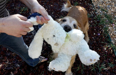 Does Fido Destroy Pricy Toys? Try These Cheap, Easy DIY Dog Toys Instead