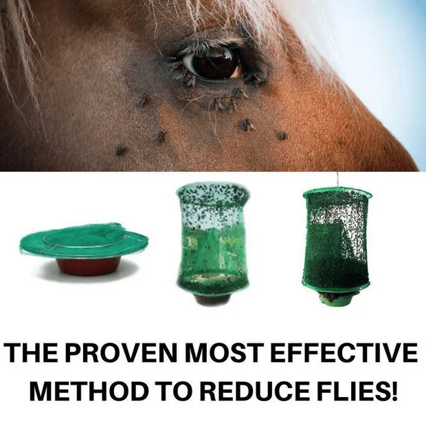 REUSABLE FLY TRAP ( FREE SHIPPING + 50% OFF )