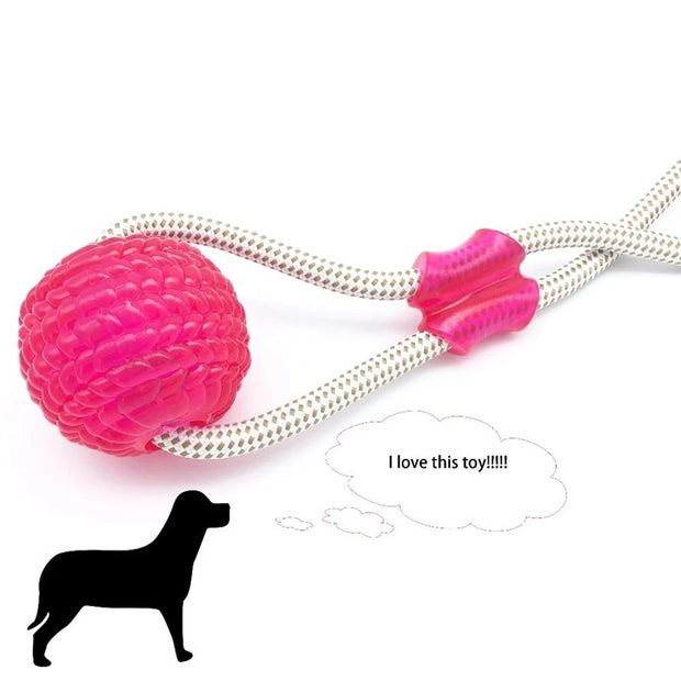 Suction Cup Dog Pet Molar Chew Toy
