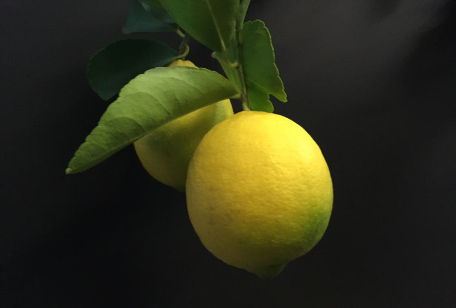 Lemon Trees & Other Citrus