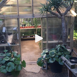 Greenhouse Fun