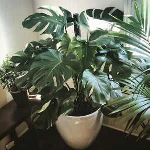Plants for a Healthy Office