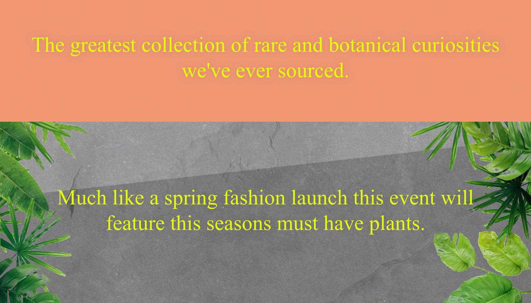 The greatest collection of rare and botanical curiosities we've ever sourced. Much like a spring fashion launch this event will feature this seasons must have plants.