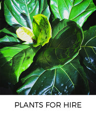 Plants for Hire