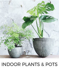 Indoor Plants and Pots