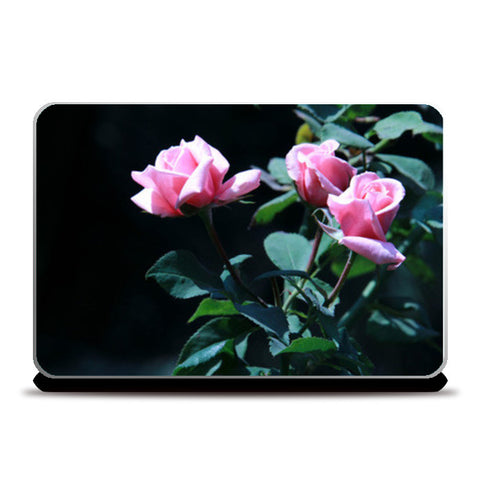 Three Pink Rose Photography Laptop Skins | Artist : Amantrika Saraogi