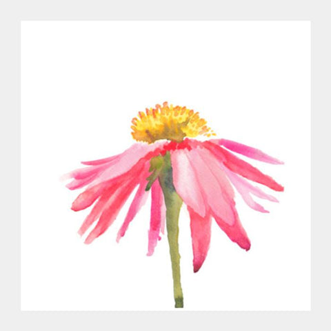 Pink Daisy Square Art Prints PosterGully Specials