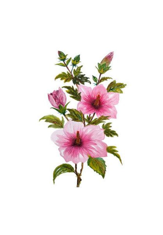 PosterGully Specials, Painted Pink Hibiscus Flowers Tropical Floral  Wall Art | Artist : Seema Hooda, - PosterGully