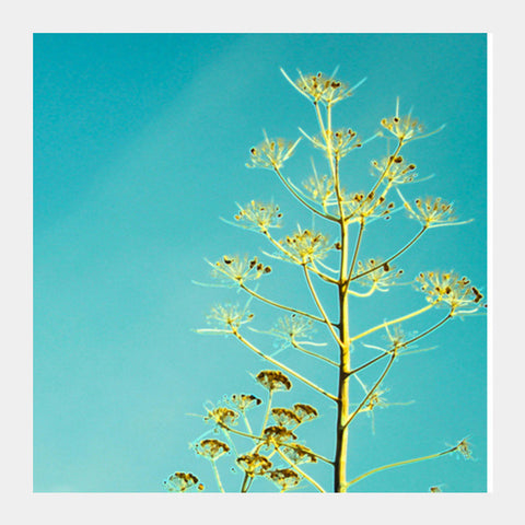 Fern in the Turkish sky Square Art Prints | Artist : Anjuri Jain