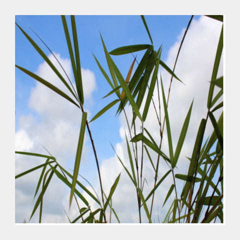 Bamboo Leaves Against Sky, Nature Square Art Prints PosterGully Specials