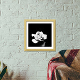 midnight rose Premium Square Italian Wooden Frames | Artist : Aakarsh Sharma