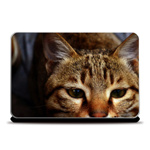 Laptop Skins, cat Laptop Skins | Artist : Agyaat Naadji, - PosterGully