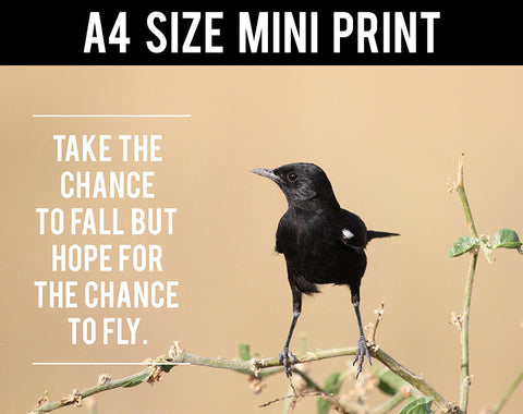 Mini Prints, Chance To Fly | Mini Print, - PosterGully