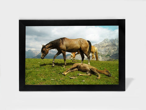 Framed Art, Highland Horses | Framed Art, - PosterGully