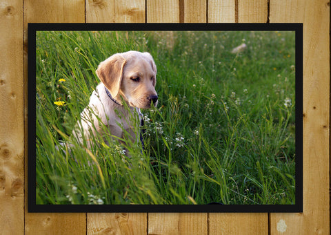 Glass Framed Posters, Labrador Alone Glass Framed Poster, - PosterGully - 1