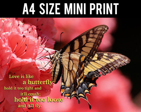 Mini Prints, Love Is Like Butterfly | Mini Print, - PosterGully