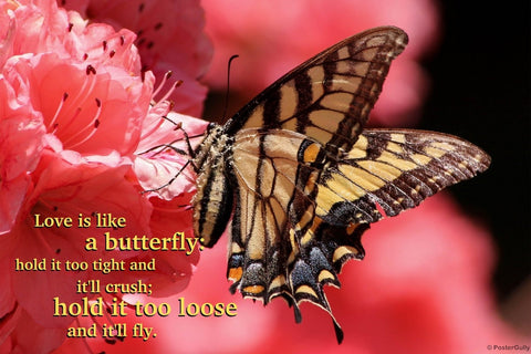 Wall Art, Love Is Like Butterfly, - PosterGully