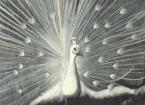 Wall Art, White Peacock Artwork | Artist: Aftab Mohamed, - PosterGully