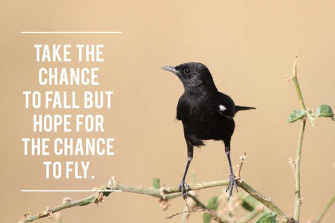Chance To Fly |  PosterGully Specials