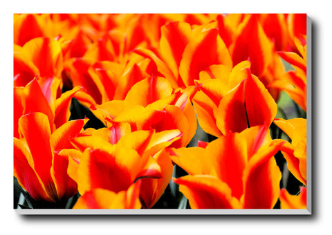 Canvas Art Prints, Flowers Stretched Canvas Print, - PosterGully - 1