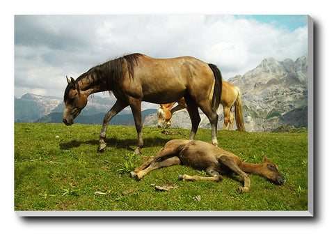 Canvas Art Prints, Highland Horses Stretched Canvas Print, - PosterGully - 1