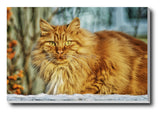Canvas Art Prints, Hapless Cat Stretched Canvas Print, - PosterGully - 1