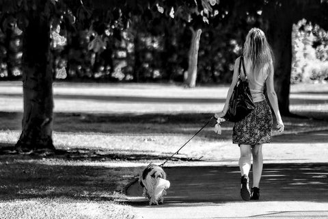Wall Art, Girl With A Dog Walking, - PosterGully